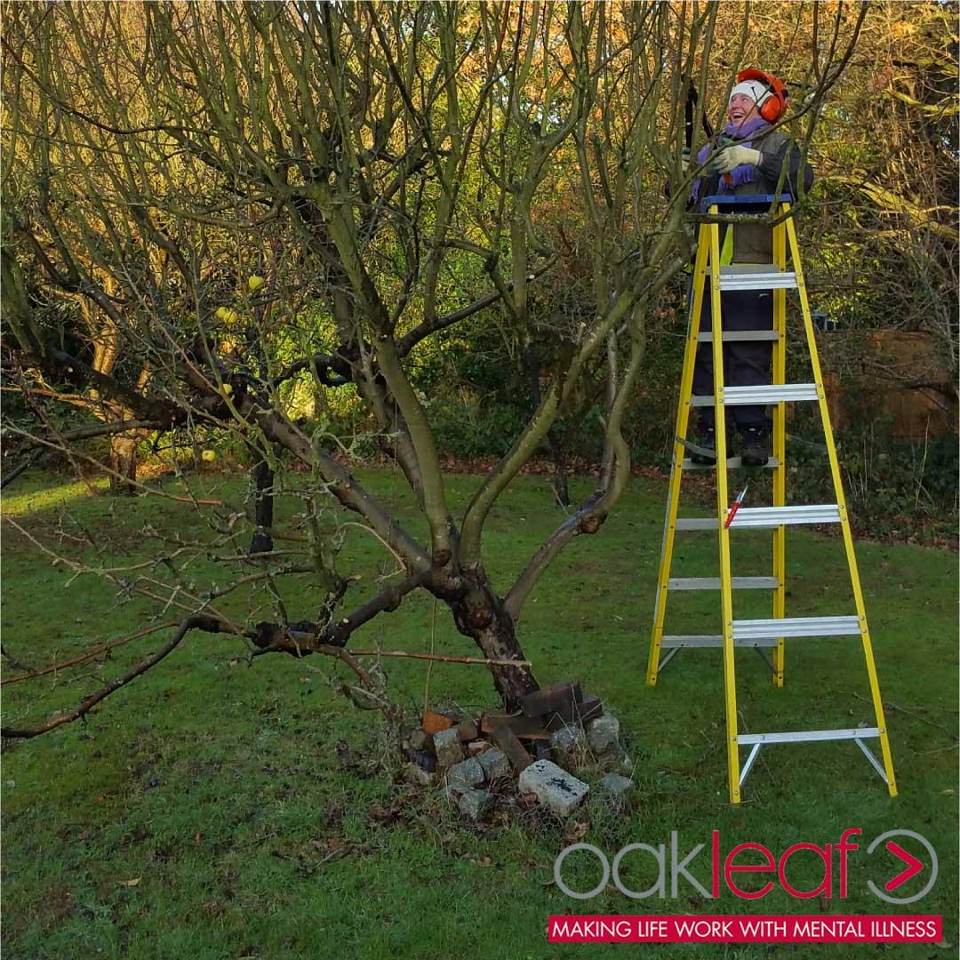 Man back at work pruning tree